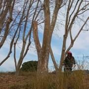 licitació manteniment zones verdes arenys de munt_CEO DEL MARESME_jardineria 1